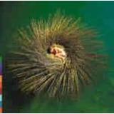 Peter Gabriel Ovo[cd  Importado Original Lacrado]
